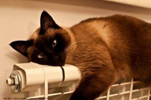 gatto termosifone - Consigli pratici per un impianto di riscaldamento efficiente